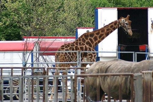 tiere gehören zum circus